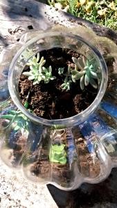 How to plant a terrarium, #terrarium #garden #plant