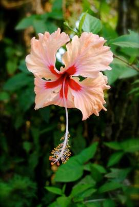Walk with Sherry as she explores Costa Rica though pictures. #costarica #nature #beach #travel #flowers