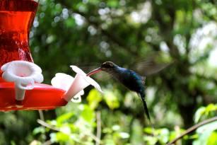 Walk with Sherry in her Photo Blog. #mountain #costarica #toucan #nature #hummingbird #waterfall