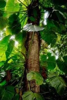 Quadding: Quepos, Costa Rica travel with Sherry as she adventures all over Costa Rica.
