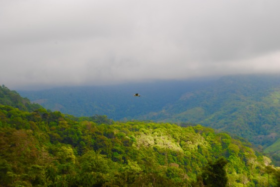 Uvita Costa Rica. Travel with Sherry as she shares her tropical experiences! #costarica #travel #jungle #beach