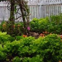 No-till Layered Kitchen Garden