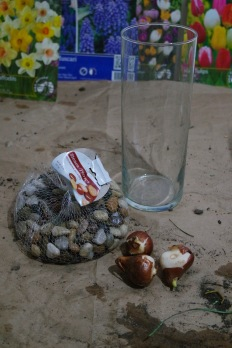 What you will need. Bulbs, small rocks and a container with water added.