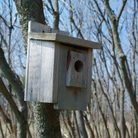 Back Yard Bird Watcher-Install a blue bird Trail