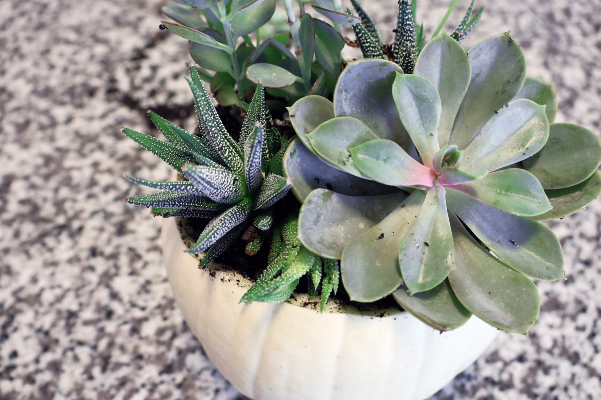 Pumpkin Succulent Planter DIY