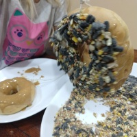 Q-Kids: Edible Bird Feeder